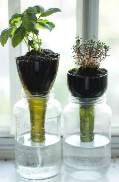 Indoor-Self-Watering-Herb-Garden