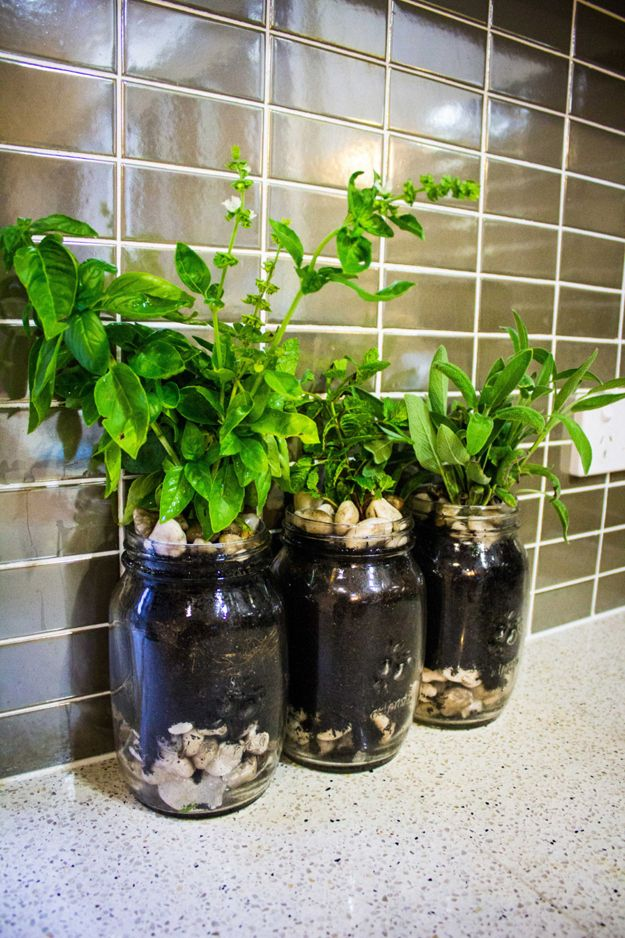 Indoor-Simple-Jar-Herb-Garden
