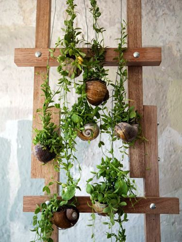 Indoor-Snail-Home-Herb-Garden