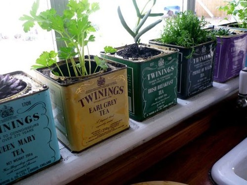 Indoor-Tea-Box-Herb-Garden