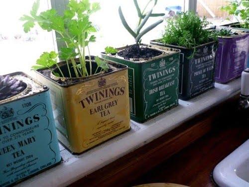 Indoor-Tea-Box-Herb-Garden