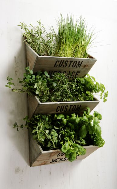 Indoor-Wooden-Herb_garden