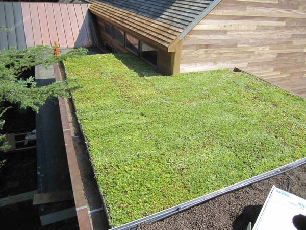 green-living-roof