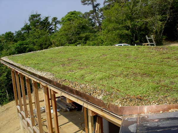 green-living-roof-installer