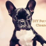DIY-pet-odor-cleaners