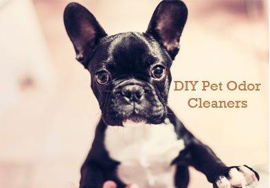 DIY-pet-odor-cleaners
