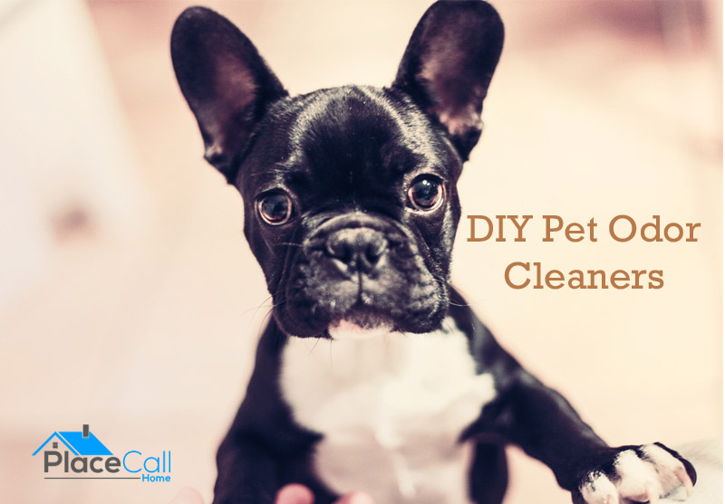 pet-odors-featured
