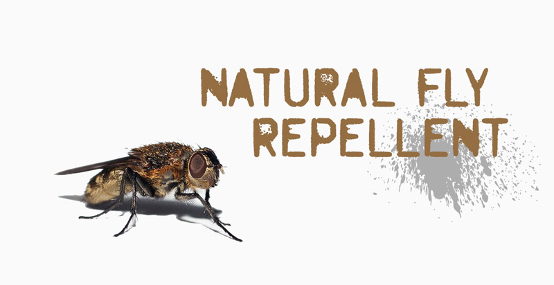 natural-fly-repellent
