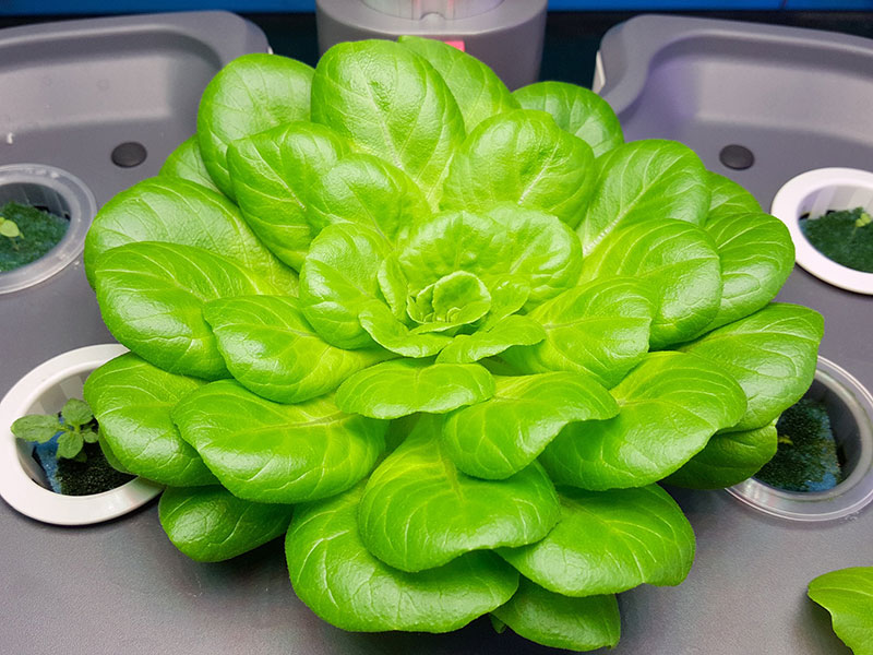 best hydroponic systems