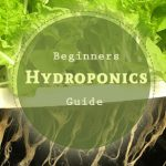 beginners-hydroponic-guide