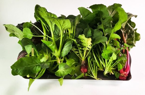 Are hydroponic veggies less nutritious?