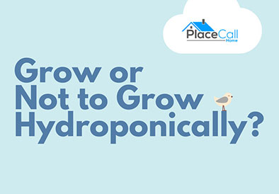 what-to-grow-hydroponically