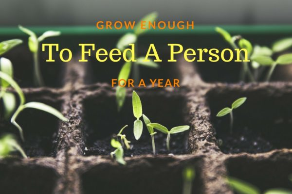 How Many Acres Of Land Would It Take To Grow Enough To Feed A Person For A Year