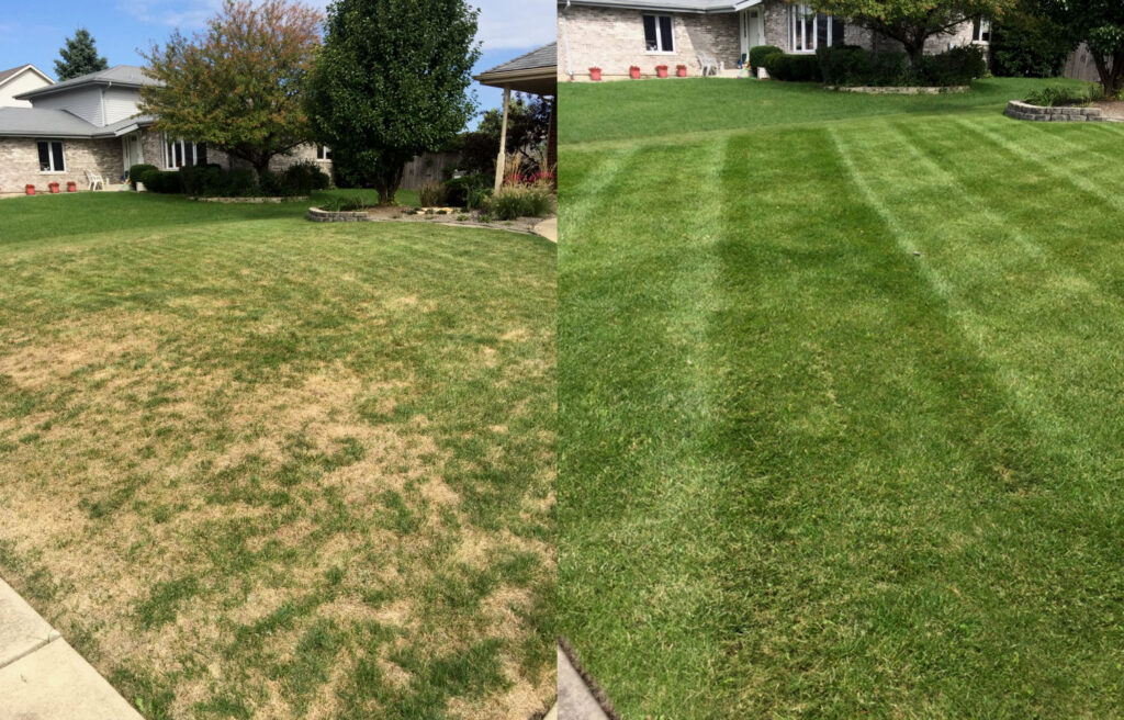 Aerate And Overseed In Summer
