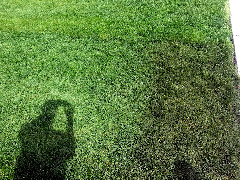 Too Much Iron Sulphate On lawn